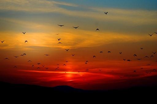 sunset-100367__340.jpg