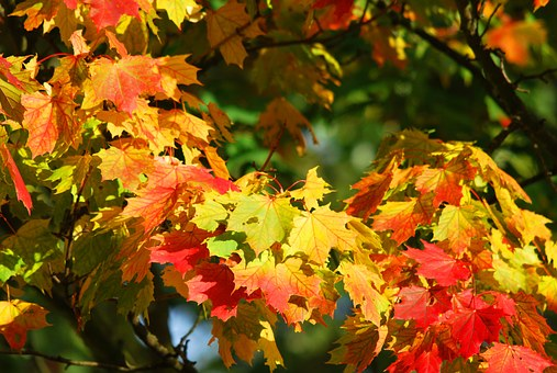 autumn-209479__340.jpg