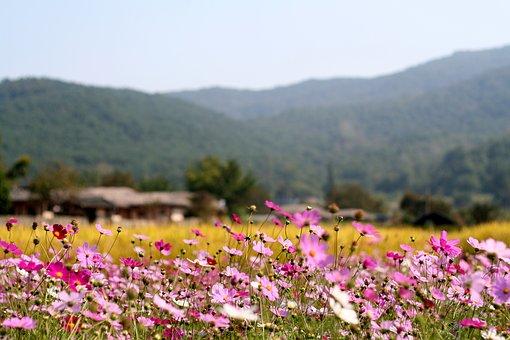 flowers-2393373__340.jpg